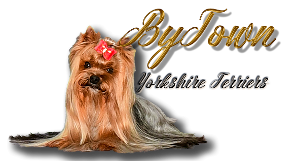 ByTown Yorkshire Terriers